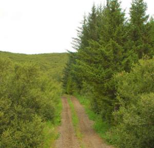 gróðureldarSK